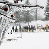 Record-Eagle/Douglas Tesner<br /> Frozen trees frame activities during the third annual Cherry Capital Winter WonderFest at Grand Traverse Resort and Spa.