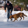 "Record-Eagle/Jan-Michael Stump<br /> Dell Knapp plays with his 16 month-old golden retriever Rip on the ice at F&M Park on Friday morning. ""You can't wear a puppy out,"" said Knapp, who took the day off to drive his daughter to the airport."