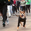 Record-Eagle/Douglas Tesner<br /> Stephen Pankowski runs along side of his dog Tag as they take part in the annual Frozen Foot Race, sponsored by Traverse City Track Club and Running Fit.