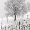 Record-Eagle/Douglas Tesner<br /> Snow covers a vineyard along Hilltop Road in Bingham Township during the winter of 2008-09.