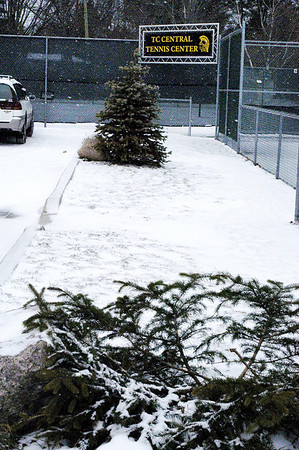 """Record-Eagle/Lisa Perkins<br /> One of """"Tuck's Trees,"""" a memorial for Traverse City Central High School student Tucker Byl who died in 2007, was cut down just before Christmas."""