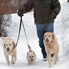 Record-Eagle/Douglas Tesner<br /> Keith Hayes, dog sitter and owner of Jordan Bed & Biscuit, takes three of his customers for a walk down East State Street in the snow.