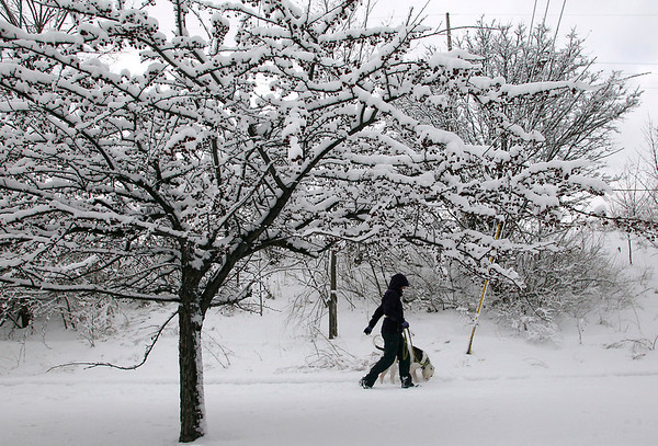 Record-Eagle/Jan-Michael Stump<br /> Erin Waineo walks her American bulldog, Momo, on the Boardman Trail under trees coated with some of the several inches of new snow fell that on the Grand Traverse region Saturday.