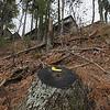 Record-Eagle/Keith King<br /> Hawk's Nest condominiums overlook Lake Michigan near a stump where a tree was cut down.