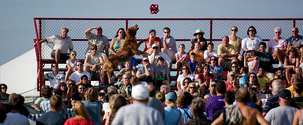 Record-Eagle/Jan-Michael Stump<br /> A dog soars through the air during the Ultimate Air Dogs competition at the Open Space.