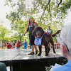 Record-Eagle/Keith King<br /> Ariana Shokoohi, 9, of Saginaw, walks her Newfoundland dog, Mudge. Both were dressed in diving-themed apparel on Tuesday during the pet and owner look-a-like portion of the National Cherry Festival Kids' Pet Show at F & M Park.