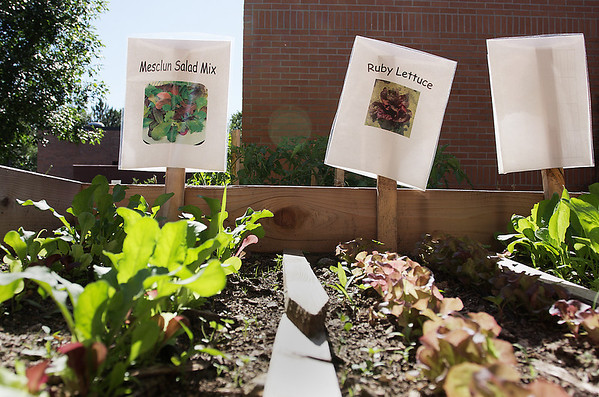 Record-Eagle/Keith King<br /> Vegetables grow outside of Interlochen Community School.