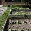 Record-Eagle/Keith King<br /> School gardens are intended to help students learn.