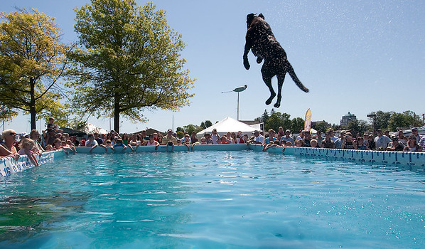 Record-Eagle/Douglas Tesner<br /> A dog flies high to the fans' cheers during the Ultimate Air Dogs contest in the Open Space at the National Cherry Festival.