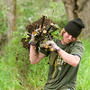 Record-Eagle/Jan-Michael Stump<br /> Cody Burns, of the SEEDS Youth Conservation Corps, lifts the roots of an autumn olive  -- an invasive tree -- near the barns by the Village at Grand Traverse Commons on Wednesday. The group aims to develop skills through conservations and stewardship projects, similar to the Depression-era Civilian Conservation Corps. The autumn olive is an  invasive plant from Asia that chokes out native plants with its fast growth.