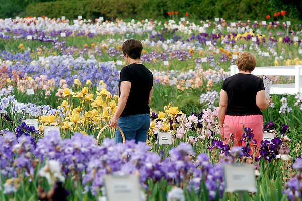 Record-Eagle/Sarah Brower<br /> Kathy Finch, left, and Louise Holder, both of Traverse City, look for flowers to plant in their own gardens at Paul and Wilma Alpers' centennial farm on M-72 West in Leelanau County.