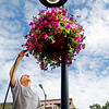 "Record-Eagle/Sarah Brower<br /> Wesley Bush Jr. of Manpower waters wave petunia flowers. About 70 baskets are hung from lamp posts on Front and Park streets in downtown Traverse City, paid for by local developer Jerry Snowden's business, Snowden Companies of Traverse City. This is the third year the company paid for the flowers, intended to ""make downtown a more pleasant place to shop and a better place to be,"" Snowden said. Plans are to expand the hanging flower basket zone further along Front Street and onto Cass and Union streets, he said. The city pays for the employee to water the baskets, said R. Ben Bifoss, city manager."