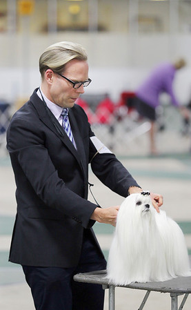 Record-Eagle/Keith King<br /> Tim Lehman, of New York, grooms his Maltese, Justine, during the Grand Traverse Kennel Club's 67th, 68th and 69th All Breed Dog Shows, Obedience and Rally Trials. The annual Cherry Capital Classic dog show will take place through today at the Grand Traverse County Civic Center.