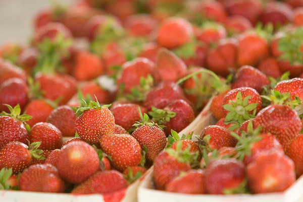 Record-Eagle/Jan-Michael Stump<br /> Fresh strawberries from Urka Farms, along M-37 south of Traverse City.