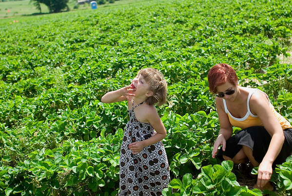 Record-Eagle/Jan-Michael Stump<br /> Westley Hullman, 4, tastes a strawberry while picking the fruit with her mother, Jena Hullman, of Traverse City, and brother Nathan (not pictured), 8, at Urka Farms Strawberries.
