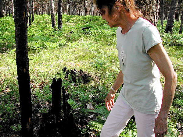 Record-Eagle/Sheri McWhirter<br /> Nancy Sloan, of Grayling, looks at signs of last year's wildfire that ripped through the Grayling Game Club, where she lives. Blackened stumps and tree trunks can be found in all directions.