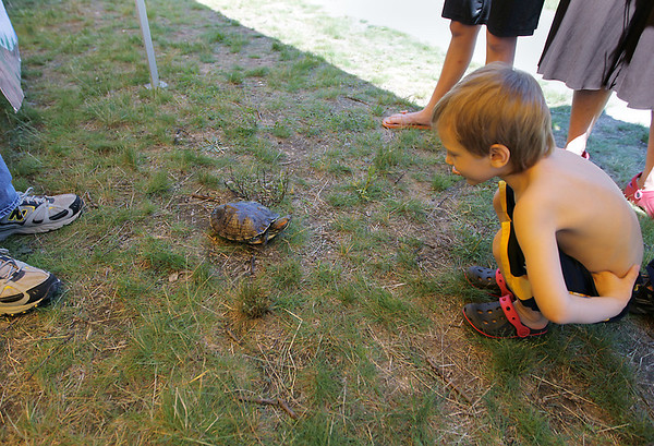 Record-Eagle/Keith King<br /> Layken Lemieux, 4, of Traverse City, squats to look at a female red-eared slider turtle. About 20 local organizations provided interactive exhibits and activities at the 3rd annual Boardman River Nature Fest.