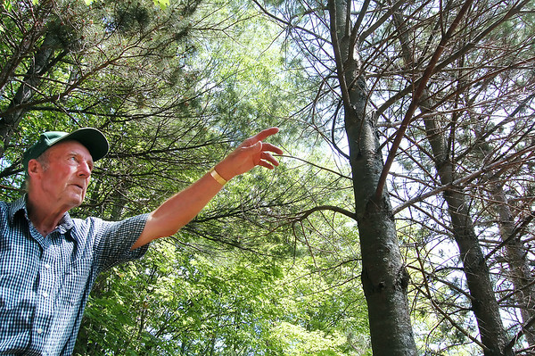 Record-Eagle/Sarah Brower<br /> Clarence Kroupa owns an 80 acre tree farm that he started in 1953 in Garfield Township. He was the first environmentalist to be awarded by the Northern Michigan Environmental Action Council in 1988.