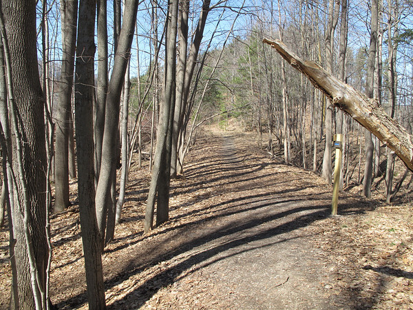 Record-Eagle/Alex Piazza<br /> Hikers found the body of Daniel John Keena, 45, Sunday in the woods west of the Village at Grand Traverse Commons.