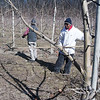 Record-Eagle/Douglas Tesner<br /> Francis Otto and his crew, including Cecilio Martinez, trim Honeycrisp apple trees that are part of the Cherry Bay Orchards just north of Suttons Bay.