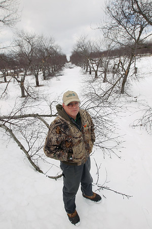 Record-Eagle/Keith King<br /> Francis Otto, orchard manager, stands near damaged tart cherry trees at Cherry Bay Orchards in Suttons Bay Township.