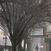 Record-Eagle/Keith King<br /> A pedestrian walks along Front Street in the rain Monday in downtown Traverse City.