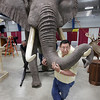 Record-Eagle/Keith King<br /> Bob Parkey, owner of Parkey's Taxidermy in Indian River, and Gary Dorion, back left, who, along with his wife Maggie, owns Hillsport Hillton Resort in Hillsport, Ontario, move a half-mount of an elephant Thursday as setup begins for the annual Traverse City Hunting and Fishing Expo in Howe Arena at the Grand Traverse County Civic Center. The event is scheduled for Friday,  from 4 to 9 p.m., Saturday,  from 9 a.m. to 7 p.m. and Sunday,  from 10 a.m. to 5 p.m.