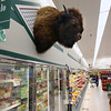 Record-Eagle/Keith King<br /> A buffalo head is on the wall at Oleson's Food Store at Oleson's Plaza West in Traverse City.