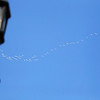 Record-Eagle/Jan-Michael Stump<br /> A wedge of swans flies over downtown Frankfort on Tuesday morning.