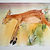 Record-Eagle/Jan-Michael Stump<br /> A painting of a dead fawn by Elk Rapids artist Joani Braun.