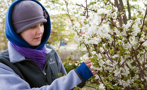 Record-Eagle/Douglas Tesner<br /> Kim Kelderhouse, of Copper River Farm, looks over a new product she decided to sell at the Sara Hardy Downtown Farmers Market in Traverse City. She said the branches from sweet cherry trees seem to be selling well.