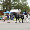 Record-Eagle/Keith King<br /> A horse-drawn carriage ride travels past Mushroom Festival attendees Saturday.