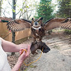 Record-Eagle/Douglas Tesner<br /> Rebecca Lessard holds a 14-month-old great horned owl named Eoin. Leelanau County is trying to take ownership of what Rebecca Lessard says is a longtime private road that leads into her property, where she operates Wings of Wonder. If the county claims the road and traffic increases, it will shut down her raptor rehabilitation business because the birds must be kept away from the public to be in compliance with a federal permit.