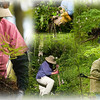 Record-Eagle/Jan-Michael Stump<br /> Clockwise from far left, Becky Mang looks for maidenhair ferns as she and other Grand Traverse Conservation District volunteers search for native plants to be rescued from a future building site off River Road; Kristine Drake digs up Canadian violet; Barb Soloman carries blue cohosh; Mike Davis carries trillium; and Soloman digs up blue cohosh.