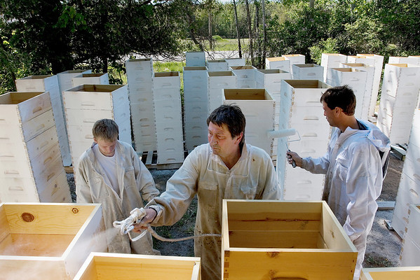 Record-Eagle/ Keith King<br /> From left, Kevin Rice, of Traverse City; Carl Beardsley, of Interlochen; and James Hilbert, of Traverse City, apply primer to recently assembled beehive supers at Hilbert's HoneyBees in Traverse City. Once completed, each super will be placed over a beehive.
