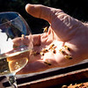 Record-Eagle/Jan-Michael Stump<br /> Sleeping Bear Farms general manager Kirk Jones holds a handful of bees near a glass of mead, a wine made from honey.