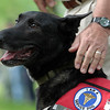Record-Eagle/Jan-Michael Stump<br /> Doug Davis, a former Air Force sentry dog handler and Vietnam veteran, stands with Remmy, a Dutch Shepherd and former bomb patrol dog that Davis adopted, during Monday's Grand Traverse Area Memorial Day Ceremony at Oakwood Cemetery.