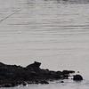 Record-Eagle/Douglas Tesner<br /> A fisherman enjoys some quiet time on the Elk River in Elk Rapids.