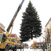 Record-Eagle/Sheri McWhirter<br /> Traverse City's downtown Christmas tree is hoisted into place Thursday at the corner of Front and Cass streets.