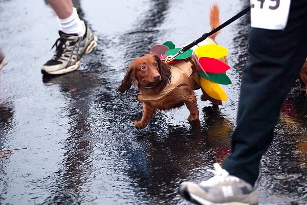 Record-Eagle/Jan-Michael Stump<br /> Nearly 1,000 runners and walkers, and several dogs, participated in Thursday's 2nd Annual Turkey Trot in Traverse City, despite a chilly rain.