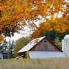 Record-Eagle/Jan-Michael Stump<br /> Fall colors frame a barn alongside M-22 just south of Suttons Bay.