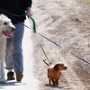 Record-Eagle/Douglas Tesner<br /> Brandy Mulvaine walks her three dogs Maeve, 5, a Irish wolf hound, and her two dachshunds Lilly, 6, and Poohbear 5, down Rasho Road.