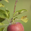 Record-Eagle file photo<br /> Michigan is expected to grow more than 26 million bushels of apples this year.