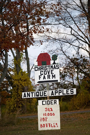 Record-Eagle/Jan-Michael Stump<br /> Kilcherman's Christmas Cove Farm near Northport features over 200 types of apple, many of them antique and rare varieties.