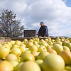 Record-Eagle/Jan-Michael Stump<br /> John Kilcherman checks an outgoing shipment of golden delicious apples at Kilcherman's Christmas Cove Farm near Northport on Tuesday afternoon.
