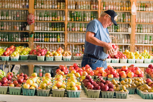Record-Eagle/Jan-Michael Stump<br /> Bill Schaar of Mason picks up some honey crisp apples at Kilcherman's Christmas Cove Farm near Northport.