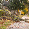 Record-Eagle/Jan-Michael Stump<br /> A tree branch lays across a sidewalk on Ninth Street near Wadsworth on Tuesday afternoon.