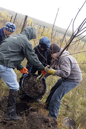 Record-Eagle/Lisa Perkins<br /> Patty Rudolph, a volunteer with the Old Mission Historical Society, along with Boy Scouts from Troop 31, Peter Melichar, Sean Brown and Chris Doerr, plant a young maple tree along Center Road on Old Mission Peninsula Saturday.
