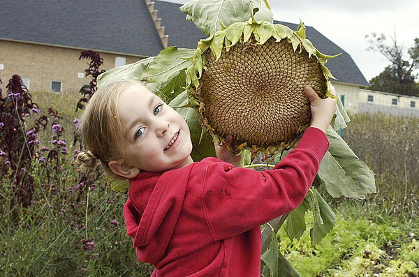 Record-Eagle/Lisa Perkins<br /> Bella Thompson, 4, holds a sunflower in the Traverse City Community Garden during Harvest Festival.