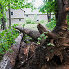 Record-Eagle/Douglas Tesner<br /> This home had trees taken down by Tuesday night's storms. The storms left residents without power and uprooted trees throughout the region.